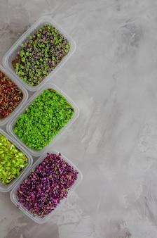 Vielzahl von mikrogrüns aus rettich, rote beete, basilikum, rucola und gurke. gesundes essen.
