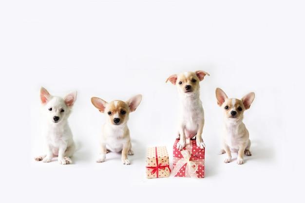 Vier hunde mit einer geschenkbox, die auf einem weißen hintergrund steht.