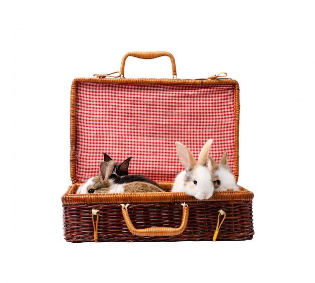 Vier kaninchen-häschen sitzen im braunen weidenkoffer, lokalisiert auf weißem hintergrund