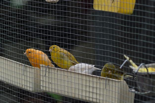 Vier kleine vögel, die im käfig essen