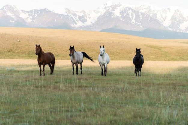 Vier pferde stehen in einer reihe vor der kulisse der berge. pferde der vier reiter