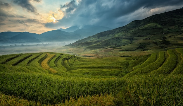 Vietnam reisfelder bereiten die ernte im nordwesten vietnams vor. vietnam landschaften.