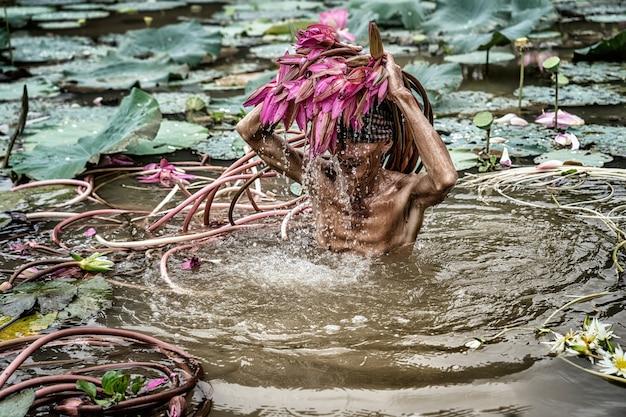 Vietnamesisch des alten mannes, der den schönen rosa lotus im see an einem phu aufhebt,