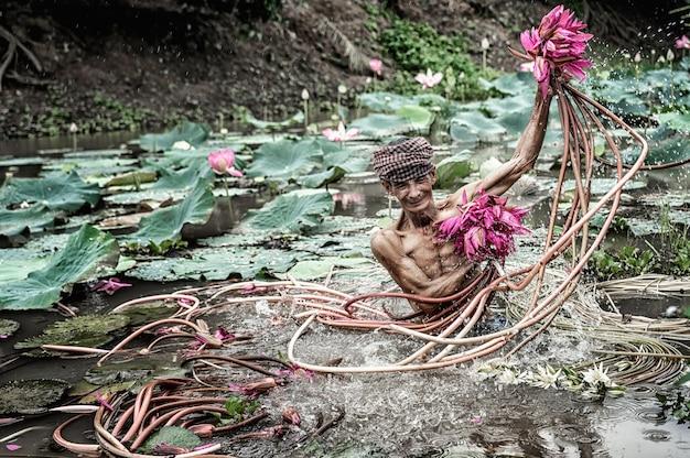 Vietnamesisch des alten mannes, der den schönen rosa lotus im see in einer provinz von phu und giang aufhebt