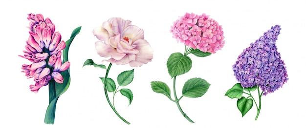 Vintage blumenkollektion von hyazinthe, rose, hortensie und flieder