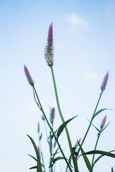 Vintage blumenpflanze bei sonnenuntergang