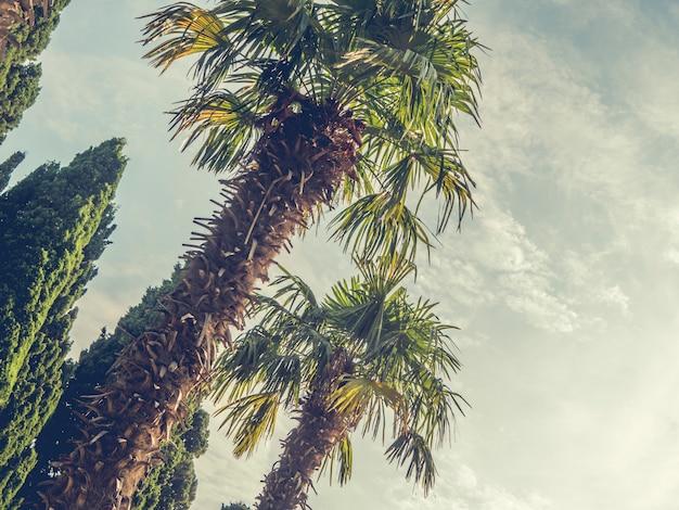 Vintage getönten palmen gegen den himmel.