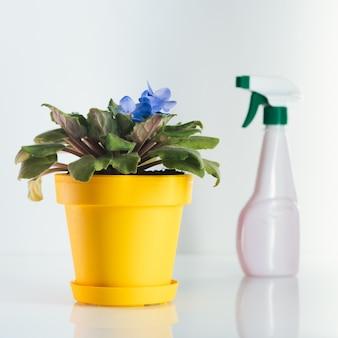 Violett und wasserspray