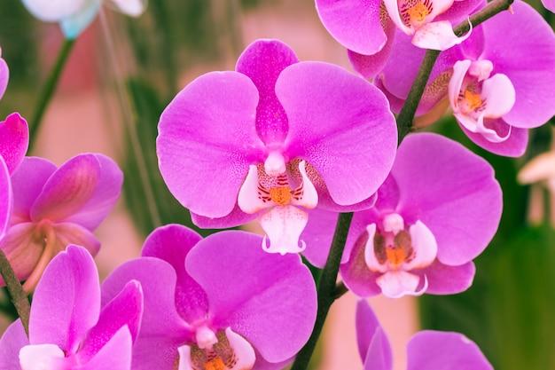 Violette blütenblätter von blumen