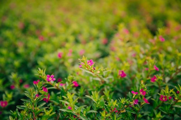 Violette blume, die in der jahreszeit blüht