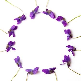 Violette blumen auf weißem hintergrund