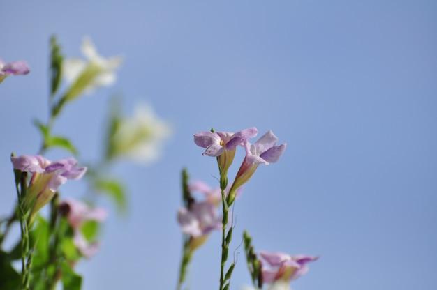 Violette blumen insekten und bienen saugen