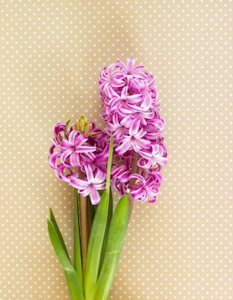 Violette hyazinthenblüten
