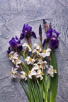 Violette iris und weiße narzissen auf grauem hintergrund.