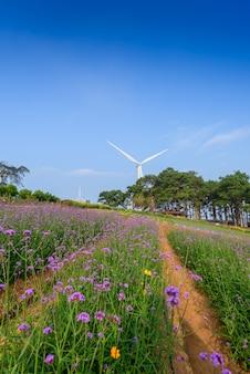 Violette verbene blüht auf unscharfem hintergrund mit windkraftanlage und sonnenschein morgens