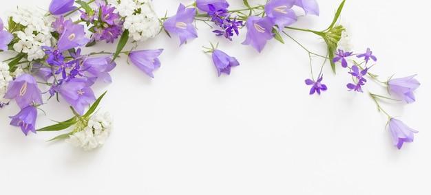Violette wilde blumen auf weißem hintergrund