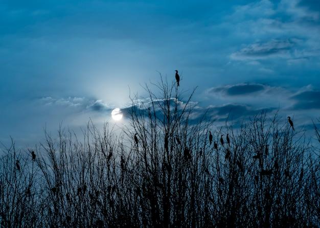 Vögel auf dem baum in der abendschattenbildart