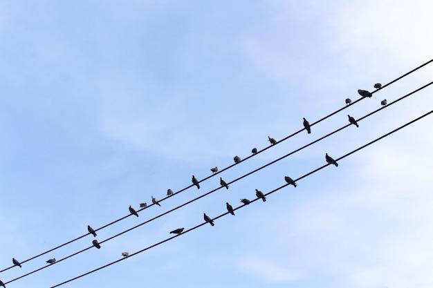 Vögel auf dem elektrischen draht