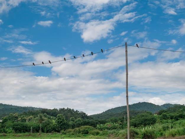 Vögel auf dem hintergrund des blauen himmels des drahtes und des naturwaldgebirges