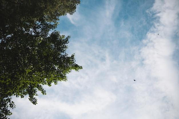 Vögel auf dem hintergrund des blauen himmels und der weißen wolken und der grünen bäume