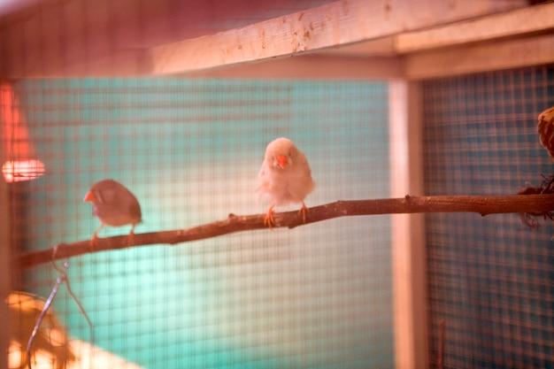 Vögel auf einer niederlassung