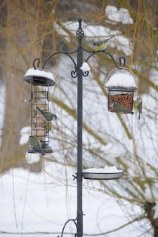 Vögel auf einer vogelzufuhr im schnee