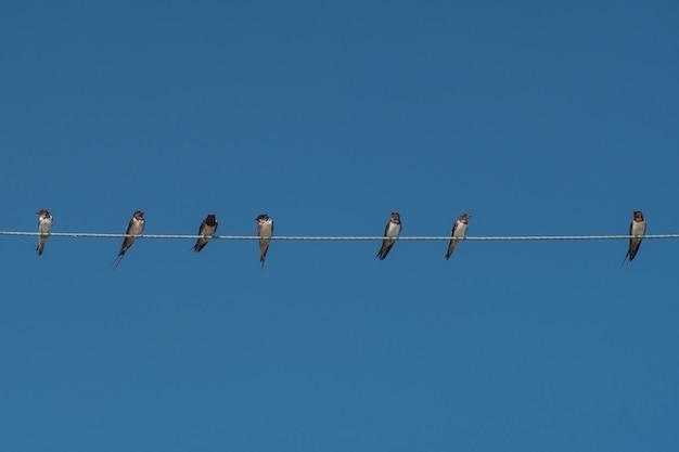 Vögel auf stromkabel