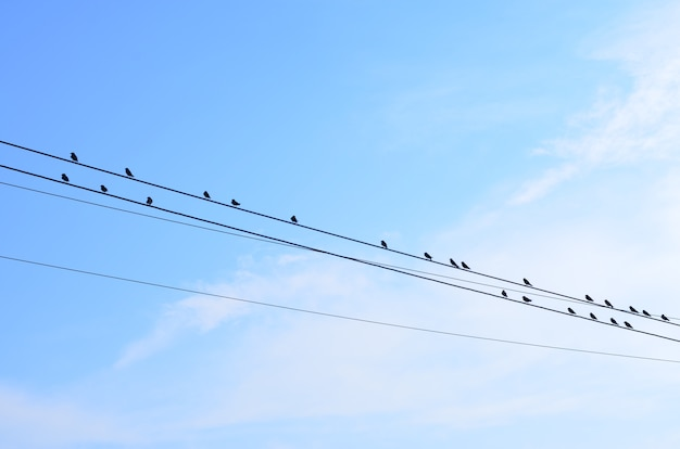 Vögel auf stromleitung mit hintergrund des blauen himmels