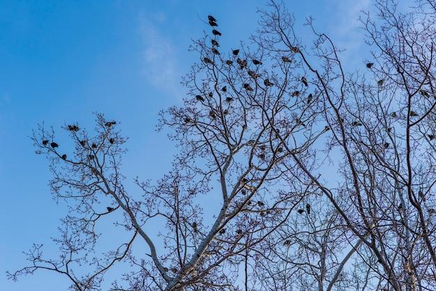 Vögel auf zweigen unter blauem himmel.