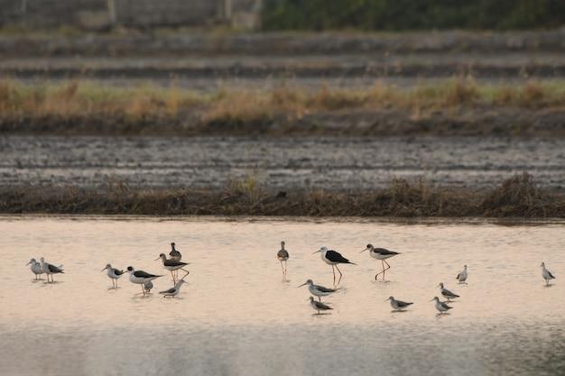 Vögel benutzen lange, knifflige münder, die im wasserfeld leben