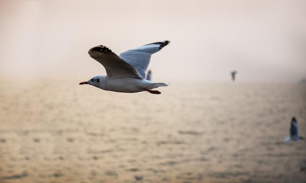Vögel bleiben auf tempeldach mit himmel