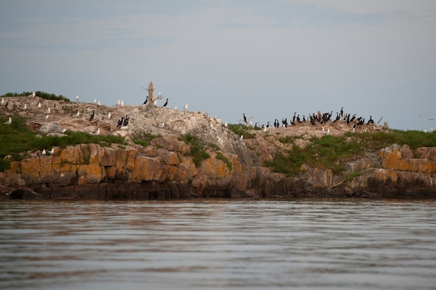 Vögel, die auf einer felseninsel am see des holzes, ontario stillstehen
