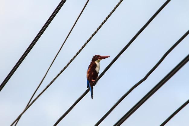 Vögel, die auf stromleitungen über klarem himmel sitzen