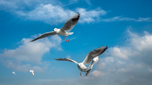Vögel, die im wind schweben