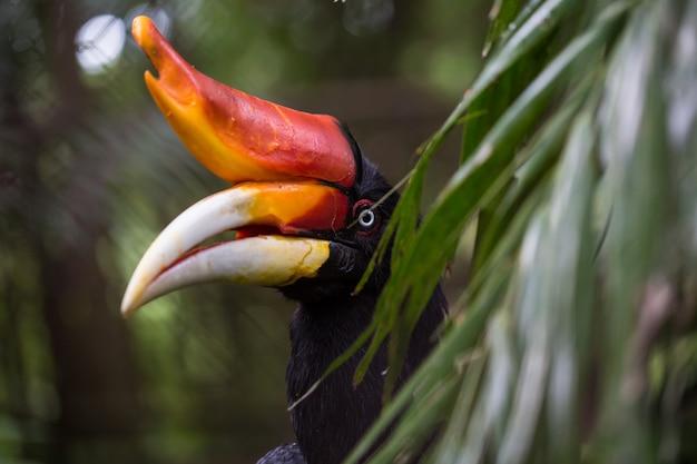 Vögel, die im zoo ausgestellt sind