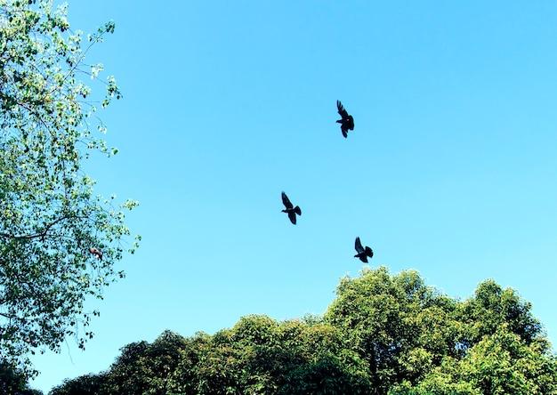 Vögel, die in den blauen himmel fliegen