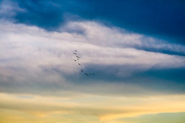 Vögel, die nach hause auf weiche wolke des bunten himmels fliegen