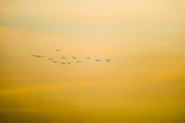 Vögel, die nach hause auf weicher wolke des sonnenunterganghimmels fliegen