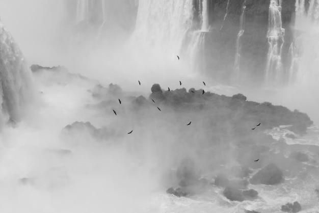 Vögel, die über brasilianische iguazu falls fliegen