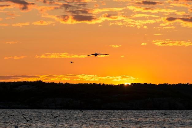 Vögel, die über einen see an der dämmerung, kenora, see des holzes, ontario, kanada fliegen