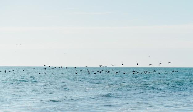 Vögel fliegen über das meer