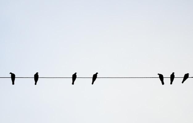 Vögel hängen am stromkabel