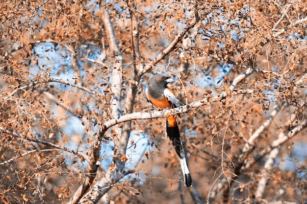 Vögel in der tierwelt auf baum
