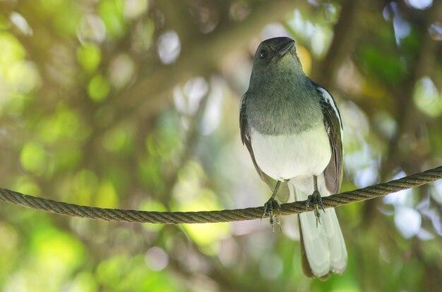 Vögel mit einem unscharfen bild.
