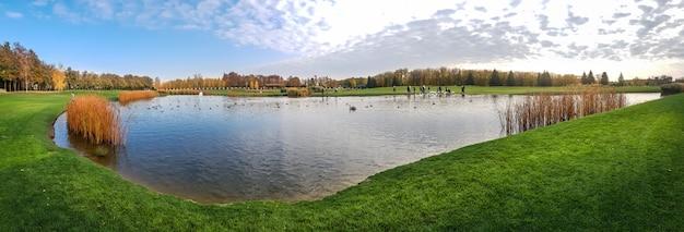 Vögel schwimmen im teich im herbstpark, panorama. oktober wald und see, panoramablick, orange und gelbes laub auf hintergrund