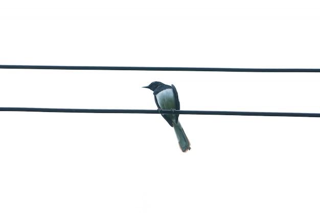 Vögel sitzen auf drähten.