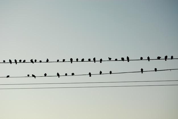 Vögel wie musikalische notizen