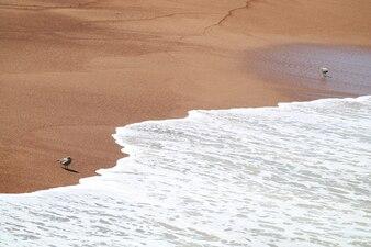 Vögel am roten Strand oder Playa Roja, die durch Wellenschaum, Paracas National Reserve, Peru abstürzen