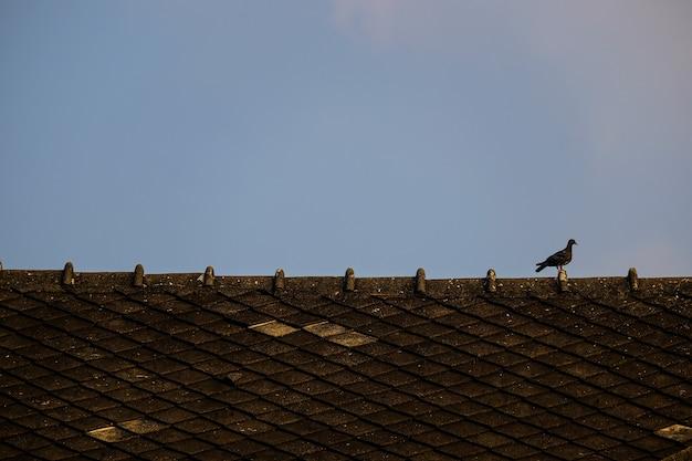 Vogel auf dem dach.