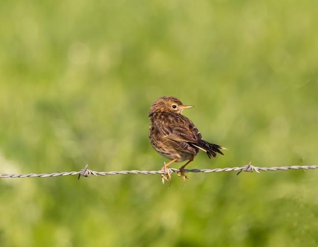 Vogel auf draht während des tages